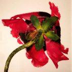 Flower No. 1