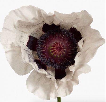 Flower No. 6