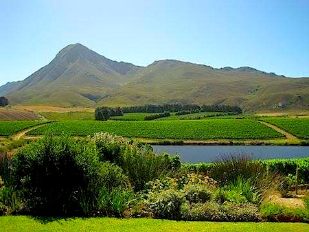 thandie wine region