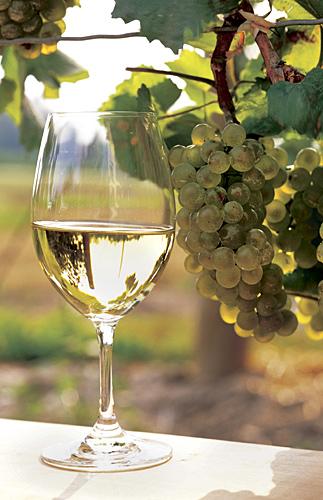 Swirl, Sniff, Sip: Pinot Blanc