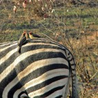 <B>On Safari:</B> Wild Kingdom